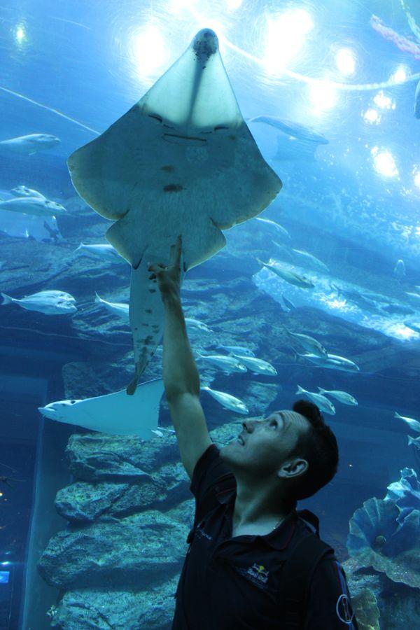 aquarium-dubai-avis