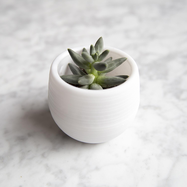 Voici mon rituel des plantes, pour se sentir mieux. Comment aider une plante à revivre? Prendre soin d'une plante pour qu'elle vous en soit reconnaissante.